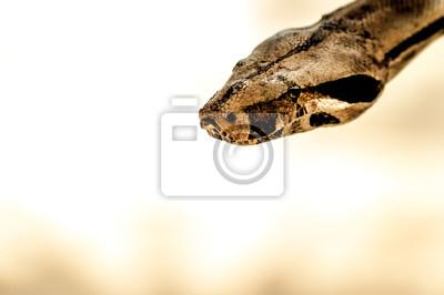 Постер Рептилии Python - Коричневой Змее,Рептилии<br>Постер на холсте или бумаге. Любого нужного вам размера. В раме или без. Подвес в комплекте. Трехслойная надежная упаковка. Доставим в любую точку России. Вам осталось только повесить картину на стену!<br>