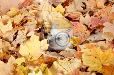 Постер Осень Милый котенок прячется в листьяхОсень<br>Постер на холсте или бумаге. Любого нужного вам размера. В раме или без. Подвес в комплекте. Трехслойная надежная упаковка. Доставим в любую точку России. Вам осталось только повесить картину на стену!<br>