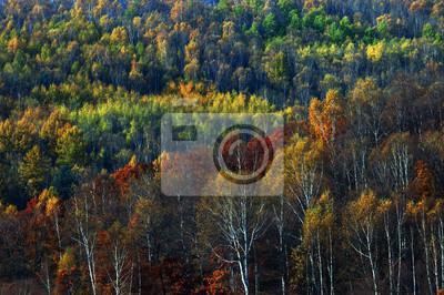Осенний лес, 30x20 см, на бумагеМонголия<br>Постер на холсте или бумаге. Любого нужного вам размера. В раме или без. Подвес в комплекте. Трехслойная надежная упаковка. Доставим в любую точку России. Вам осталось только повесить картину на стену!<br>