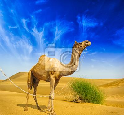 Постер Африканский пейзаж Ландшафт пустыни. Песок, верблюд и голубое небо с облаками. ПутешествиеАфриканский пейзаж<br>Постер на холсте или бумаге. Любого нужного вам размера. В раме или без. Подвес в комплекте. Трехслойная надежная упаковка. Доставим в любую точку России. Вам осталось только повесить картину на стену!<br>