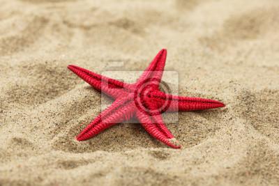 Постер Морские звезды