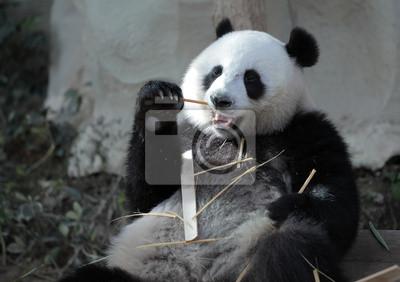 Постер Животные Panda, 28x20 см, на бумагеПанда<br>Постер на холсте или бумаге. Любого нужного вам размера. В раме или без. Подвес в комплекте. Трехслойная надежная упаковка. Доставим в любую точку России. Вам осталось только повесить картину на стену!<br>