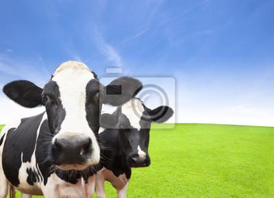 Постер Коровы Корова на зеленой травой поле с облаком фонаКоровы<br>Постер на холсте или бумаге. Любого нужного вам размера. В раме или без. Подвес в комплекте. Трехслойная надежная упаковка. Доставим в любую точку России. Вам осталось только повесить картину на стену!<br>