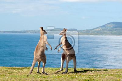 Бокс Кенгуру - Австралия, 30x20 см, на бумагеКенгуру<br>Постер на холсте или бумаге. Любого нужного вам размера. В раме или без. Подвес в комплекте. Трехслойная надежная упаковка. Доставим в любую точку России. Вам осталось только повесить картину на стену!<br>
