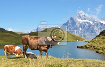 Коров в альпийские Луга. Регион Юнгфрау, Швейцария, 31x20 см, на бумагеКоровы<br>Постер на холсте или бумаге. Любого нужного вам размера. В раме или без. Подвес в комплекте. Трехслойная надежная упаковка. Доставим в любую точку России. Вам осталось только повесить картину на стену!<br>