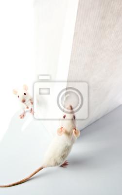 Постер Мыши Крысы и белый пакетМыши<br>Постер на холсте или бумаге. Любого нужного вам размера. В раме или без. Подвес в комплекте. Трехслойная надежная упаковка. Доставим в любую точку России. Вам осталось только повесить картину на стену!<br>