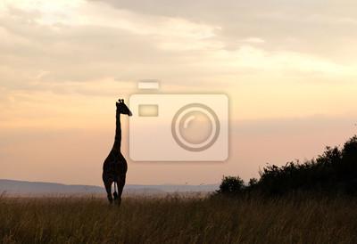 Постер Жирафы Силуэт Жирафа в Национальный парк СеренгетиЖирафы<br>Постер на холсте или бумаге. Любого нужного вам размера. В раме или без. Подвес в комплекте. Трехслойная надежная упаковка. Доставим в любую точку России. Вам осталось только повесить картину на стену!<br>