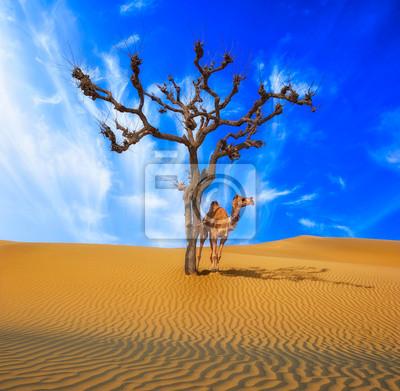 Постер Африканский пейзаж Одинокое дерево и верблюдАфриканский пейзаж<br>Постер на холсте или бумаге. Любого нужного вам размера. В раме или без. Подвес в комплекте. Трехслойная надежная упаковка. Доставим в любую точку России. Вам осталось только повесить картину на стену!<br>