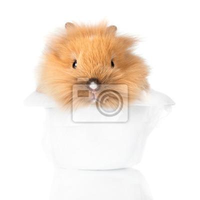 Постер Кролики Милый кролик в шляпеКролики<br>Постер на холсте или бумаге. Любого нужного вам размера. В раме или без. Подвес в комплекте. Трехслойная надежная упаковка. Доставим в любую точку России. Вам осталось только повесить картину на стену!<br>