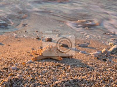 Постер Подводный мир Постер 47861801, 27x20 см, на бумагеМорские звезды<br>Постер на холсте или бумаге. Любого нужного вам размера. В раме или без. Подвес в комплекте. Трехслойная надежная упаковка. Доставим в любую точку России. Вам осталось только повесить картину на стену!<br>