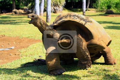 Постер Черепахи Гигантские черепахиЧерепахи<br>Постер на холсте или бумаге. Любого нужного вам размера. В раме или без. Подвес в комплекте. Трехслойная надежная упаковка. Доставим в любую точку России. Вам осталось только повесить картину на стену!<br>