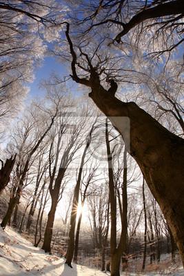 Постер Альпийский пейзаж Зима деревья против закатАльпийский пейзаж<br>Постер на холсте или бумаге. Любого нужного вам размера. В раме или без. Подвес в комплекте. Трехслойная надежная упаковка. Доставим в любую точку России. Вам осталось только повесить картину на стену!<br>
