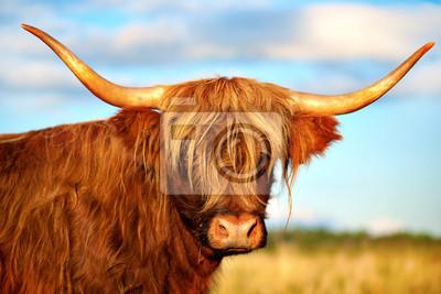 Постер Шотландия Шотландское нагорье короваШотландия<br>Постер на холсте или бумаге. Любого нужного вам размера. В раме или без. Подвес в комплекте. Трехслойная надежная упаковка. Доставим в любую точку России. Вам осталось только повесить картину на стену!<br>