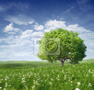 Постер Пейзаж равнинный Летний пейзаж с деревомПейзаж равнинный<br>Постер на холсте или бумаге. Любого нужного вам размера. В раме или без. Подвес в комплекте. Трехслойная надежная упаковка. Доставим в любую точку России. Вам осталось только повесить картину на стену!<br>