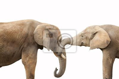 Пару слонов на белом фоне, 30x20 см, на бумагеСлоны<br>Постер на холсте или бумаге. Любого нужного вам размера. В раме или без. Подвес в комплекте. Трехслойная надежная упаковка. Доставим в любую точку России. Вам осталось только повесить картину на стену!<br>