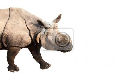 Постер Носороги Носорог на белом фонеНосороги<br>Постер на холсте или бумаге. Любого нужного вам размера. В раме или без. Подвес в комплекте. Трехслойная надежная упаковка. Доставим в любую точку России. Вам осталось только повесить картину на стену!<br>