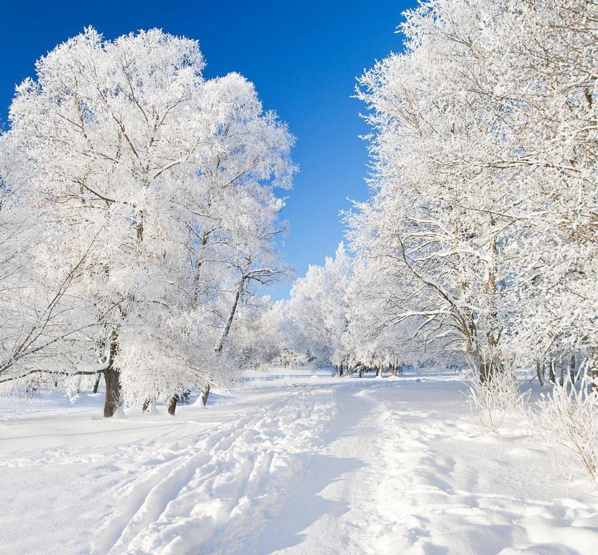 "Постер Зима ""Зимний парк в снегу"" от Artwall"