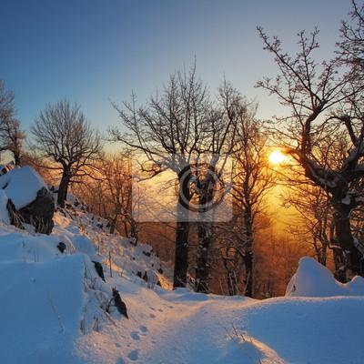 Постер Зима Красивый зимний закат, деревья в снегуЗима<br>Постер на холсте или бумаге. Любого нужного вам размера. В раме или без. Подвес в комплекте. Трехслойная надежная упаковка. Доставим в любую точку России. Вам осталось только повесить картину на стену!<br>
