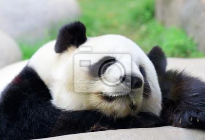 Постер Панда Спальный PandaПанда<br>Постер на холсте или бумаге. Любого нужного вам размера. В раме или без. Подвес в комплекте. Трехслойная надежная упаковка. Доставим в любую точку России. Вам осталось только повесить картину на стену!<br>