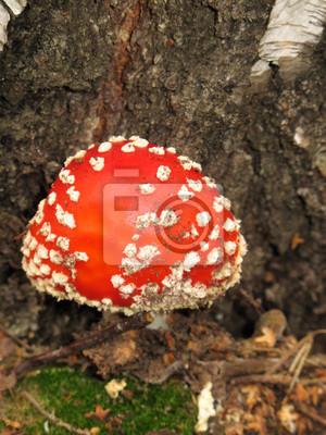 Постер Грибы Мухомор (Amanita muscaria) грибов в осеннем лесуГрибы<br>Постер на холсте или бумаге. Любого нужного вам размера. В раме или без. Подвес в комплекте. Трехслойная надежная упаковка. Доставим в любую точку России. Вам осталось только повесить картину на стену!<br>