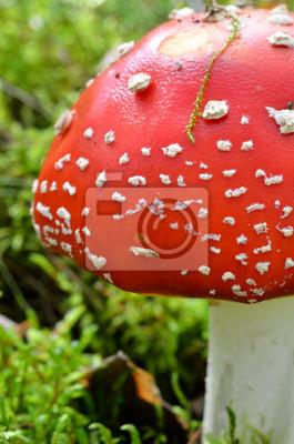 Постер Грибы Мухомор mushroom. поганки в лесуГрибы<br>Постер на холсте или бумаге. Любого нужного вам размера. В раме или без. Подвес в комплекте. Трехслойная надежная упаковка. Доставим в любую точку России. Вам осталось только повесить картину на стену!<br>