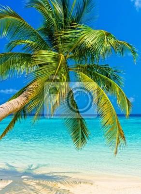 Постер Гавайи Тропический пляжГавайи<br>Постер на холсте или бумаге. Любого нужного вам размера. В раме или без. Подвес в комплекте. Трехслойная надежная упаковка. Доставим в любую точку России. Вам осталось только повесить картину на стену!<br>