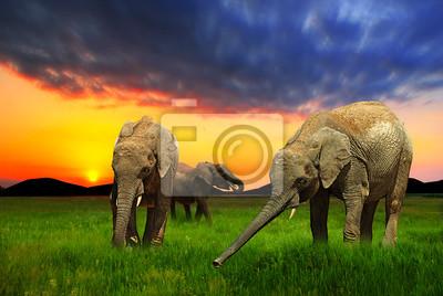 Постер Слоны