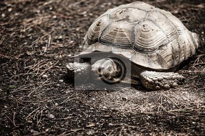 Постер Черепахи