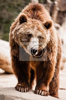 Постер Животные Бурый медведь в смешной позе, 20x30 см, на бумагеМедведи<br>Постер на холсте или бумаге. Любого нужного вам размера. В раме или без. Подвес в комплекте. Трехслойная надежная упаковка. Доставим в любую точку России. Вам осталось только повесить картину на стену!<br>