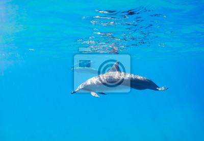 Дельфины, 29x20 см, на бумагеДельфины<br>Постер на холсте или бумаге. Любого нужного вам размера. В раме или без. Подвес в комплекте. Трехслойная надежная упаковка. Доставим в любую точку России. Вам осталось только повесить картину на стену!<br>