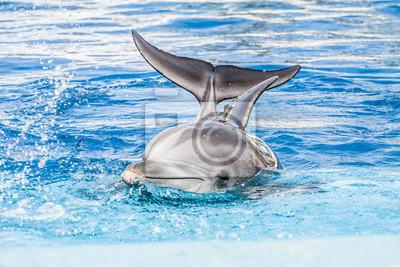 Дельфины плавают в бассейне, 30x20 см, на бумагеДельфины<br>Постер на холсте или бумаге. Любого нужного вам размера. В раме или без. Подвес в комплекте. Трехслойная надежная упаковка. Доставим в любую точку России. Вам осталось только повесить картину на стену!<br>