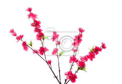 Постер Сакура Cherry blossom, изолированных в беломСакура<br>Постер на холсте или бумаге. Любого нужного вам размера. В раме или без. Подвес в комплекте. Трехслойная надежная упаковка. Доставим в любую точку России. Вам осталось только повесить картину на стену!<br>