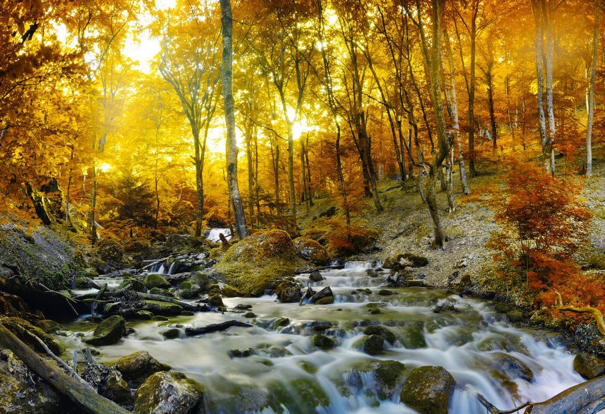 Постер Водопады Осенний ручей лес с желтые деревьяВодопады<br>Постер на холсте или бумаге. Любого нужного вам размера. В раме или без. Подвес в комплекте. Трехслойная надежная упаковка. Доставим в любую точку России. Вам осталось только повесить картину на стену!<br>