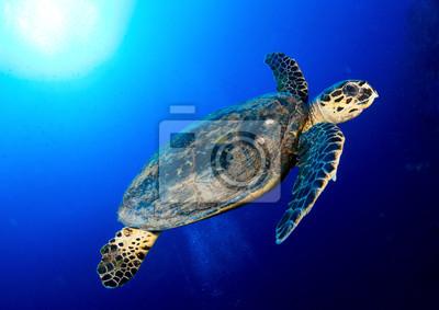 Морские море черепаха в глубокое синее, Красное Море, Египет., 28x20 см, на бумагеЧерепахи<br>Постер на холсте или бумаге. Любого нужного вам размера. В раме или без. Подвес в комплекте. Трехслойная надежная упаковка. Доставим в любую точку России. Вам осталось только повесить картину на стену!<br>