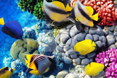 Постер Рыбы Кораллы и рыбы в Красном Море. Египет, Африка.Рыбы<br>Постер на холсте или бумаге. Любого нужного вам размера. В раме или без. Подвес в комплекте. Трехслойная надежная упаковка. Доставим в любую точку России. Вам осталось только повесить картину на стену!<br>