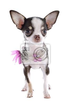 Постер Собаки
