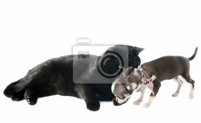 Щенок чихуахуа и кошка, 33x20 см, на бумагеСобаки<br>Постер на холсте или бумаге. Любого нужного вам размера. В раме или без. Подвес в комплекте. Трехслойная надежная упаковка. Доставим в любую точку России. Вам осталось только повесить картину на стену!<br>