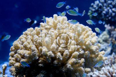 Красное Море, кораллы, дом для Рыб вблизи портрет, 30x20 см, на бумагеРыбы<br>Постер на холсте или бумаге. Любого нужного вам размера. В раме или без. Подвес в комплекте. Трехслойная надежная упаковка. Доставим в любую точку России. Вам осталось только повесить картину на стену!<br>