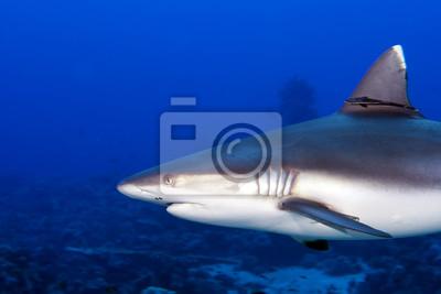 Постер Подводный мир Серая акула челюсти готовы к нападению, подводный макро, портрет, 30x20 см, на бумагеАкулы<br>Постер на холсте или бумаге. Любого нужного вам размера. В раме или без. Подвес в комплекте. Трехслойная надежная упаковка. Доставим в любую точку России. Вам осталось только повесить картину на стену!<br>