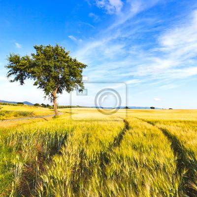 Постер Тоскана Пшеничное поле, дорожки, дерево и небо весной. Сельский Пейзаж.Тоскана<br>Постер на холсте или бумаге. Любого нужного вам размера. В раме или без. Подвес в комплекте. Трехслойная надежная упаковка. Доставим в любую точку России. Вам осталось только повесить картину на стену!<br>