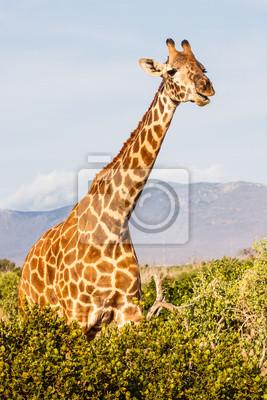 Постер Африканский пейзаж Жираф в КенииАфриканский пейзаж<br>Постер на холсте или бумаге. Любого нужного вам размера. В раме или без. Подвес в комплекте. Трехслойная надежная упаковка. Доставим в любую точку России. Вам осталось только повесить картину на стену!<br>