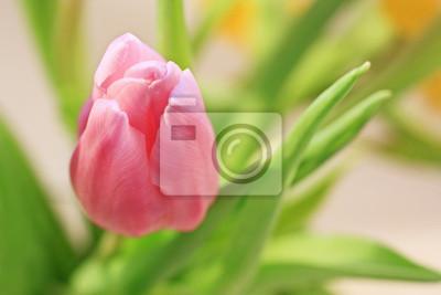 Постер Весна Прекрасный розовый тюльпан макроВесна<br>Постер на холсте или бумаге. Любого нужного вам размера. В раме или без. Подвес в комплекте. Трехслойная надежная упаковка. Доставим в любую точку России. Вам осталось только повесить картину на стену!<br>
