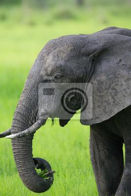 Слон в Замбии, Африка сафари, 20x30 см, на бумагеСлоны<br>Постер на холсте или бумаге. Любого нужного вам размера. В раме или без. Подвес в комплекте. Трехслойная надежная упаковка. Доставим в любую точку России. Вам осталось только повесить картину на стену!<br>
