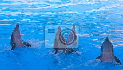 Постер Подводный мир Постер 48942662, 35x20 см, на бумагеДельфины<br>Постер на холсте или бумаге. Любого нужного вам размера. В раме или без. Подвес в комплекте. Трехслойная надежная упаковка. Доставим в любую точку России. Вам осталось только повесить картину на стену!<br>