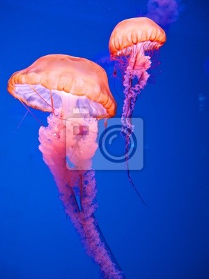 Постер Подводный мир Jelly fish, 20x27 см, на бумагеМедузы<br>Постер на холсте или бумаге. Любого нужного вам размера. В раме или без. Подвес в комплекте. Трехслойная надежная упаковка. Доставим в любую точку России. Вам осталось только повесить картину на стену!<br>