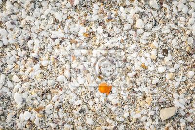 Постер Подводный мир Sea shell фона, 30x20 см, на бумагеРакушки<br>Постер на холсте или бумаге. Любого нужного вам размера. В раме или без. Подвес в комплекте. Трехслойная надежная упаковка. Доставим в любую точку России. Вам осталось только повесить картину на стену!<br>