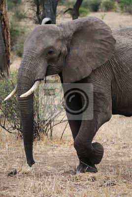 Il профиль dell Elefante, 20x30 см, на бумагеСлоны<br>Постер на холсте или бумаге. Любого нужного вам размера. В раме или без. Подвес в комплекте. Трехслойная надежная упаковка. Доставим в любую точку России. Вам осталось только повесить картину на стену!<br>