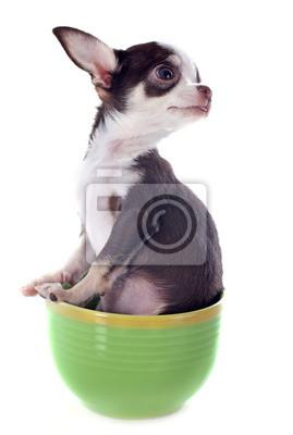 Постер Собаки Постер 49041543, 20x30 см, на бумагеСобаки<br>Постер на холсте или бумаге. Любого нужного вам размера. В раме или без. Подвес в комплекте. Трехслойная надежная упаковка. Доставим в любую точку России. Вам осталось только повесить картину на стену!<br>