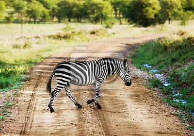 Постер Африканский пейзаж Зебра, идущая по дороге в Африканской саванне. Сафари в СеренгетиАфриканский пейзаж<br>Постер на холсте или бумаге. Любого нужного вам размера. В раме или без. Подвес в комплекте. Трехслойная надежная упаковка. Доставим в любую точку России. Вам осталось только повесить картину на стену!<br>