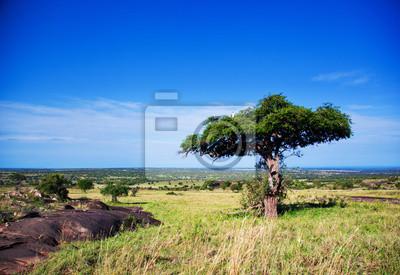 Постер Африканский пейзаж Саванна, Серенгети, ТанзанияАфриканский пейзаж<br>Постер на холсте или бумаге. Любого нужного вам размера. В раме или без. Подвес в комплекте. Трехслойная надежная упаковка. Доставим в любую точку России. Вам осталось только повесить картину на стену!<br>